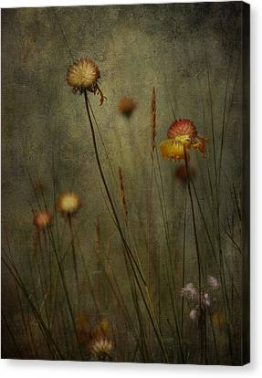 Wild Beauty  Canvas Print by Empty Wall
