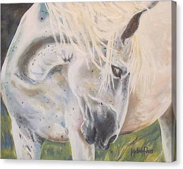 Wild Blush Canvas Print by Melody Perez