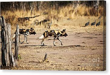 Wild Dogs Canvas Print