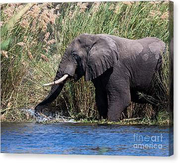 Canvas Print featuring the photograph Wild Elephant Splashing In Water by Karen Lee Ensley