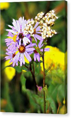 Wild Floral Canvas Print by Marty Koch