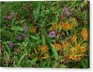 Wild Flowers Canvas Print by Beverly Hammond