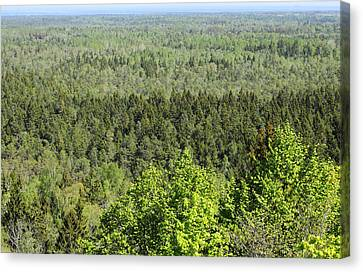 wild forest in the Slitere Canvas Print by Igors Parhomciks