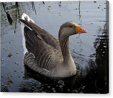 Canvas Print featuring the photograph Wild Greylag Goose by Lynn Palmer