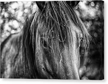Forelock Canvas Print - Wild Hair by Toni Hopper