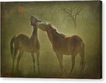 Wild Horses At Play Canvas Print by Carolyn Dalessandro