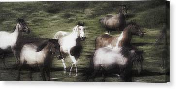 Wild Horses On The Move Canvas Print by Don Hammond
