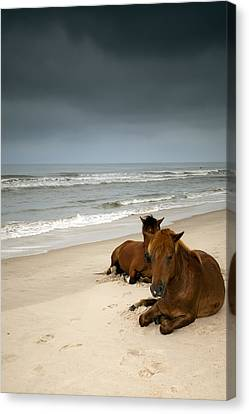 Wild Horses Canvas Print by photo by Edward Kreis, dK.i imaging