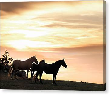 Wild Horses Sunset 3 Canvas Print by Leland D Howard
