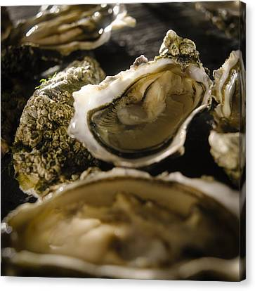 Raw Oyster Canvas Print - Wild Oysters In Shell by Duncan Davis