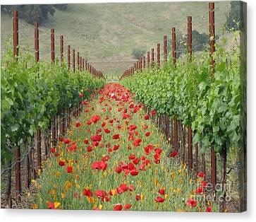 Wild Poppy Canvas Print