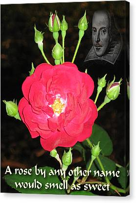 Wild Rose And The Bard Canvas Print by Terry Lynch