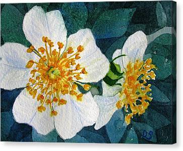 Wild Roses Canvas Print by Debra Spinks