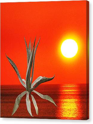 Wild Thing Canvas Print by Eric Kempson