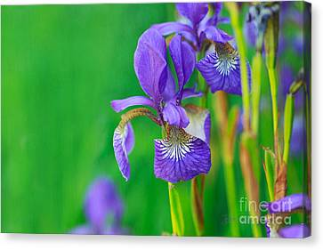 Wild Thing Canvas Print by Beve Brown-Clark Photography