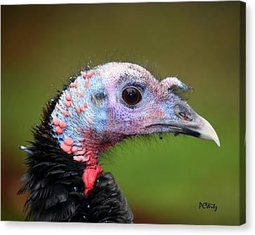 Wild Turkey Canvas Print by Patrick Witz