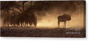 Canvas Print featuring the photograph Wildebeests In The Dust - Botswana by Craig Lovell