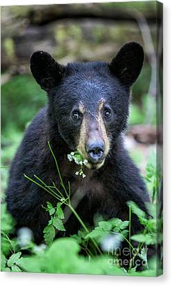 Wildflower Bear Canvas Print by Ronald Lutz