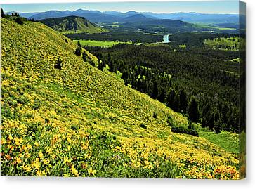 Wildflower Mountain In Wyoming Canvas Print by Jeff R Clow