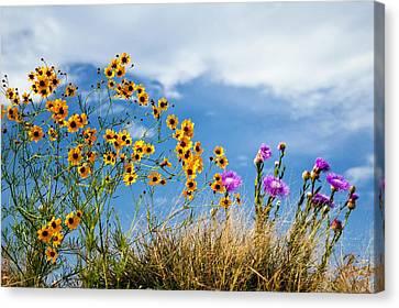 Wildflower Weed Canvas Print by Tamyra Ayles