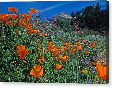 Wildflower Wonderland Canvas Print by Kathy Yates