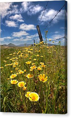Wildflowers And Barbed Wire Canvas Print by Peter Tellone