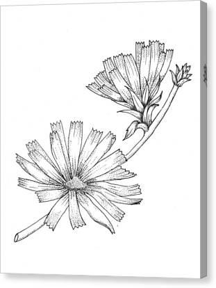 Wildflowers Canvas Print by Marci Mongelli