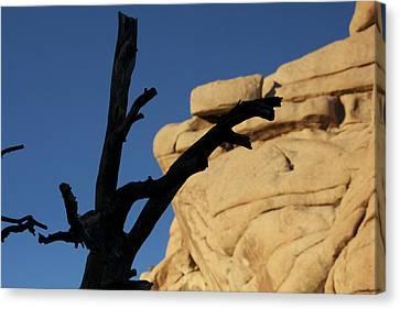 Will Desert Give Life Canvas Print by Carolina Liechtenstein