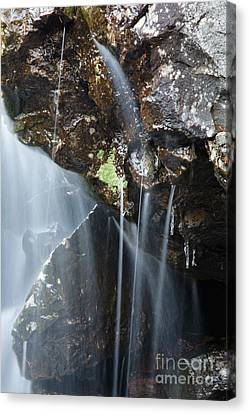Willey Brook - White Mountains New Hampshire  Canvas Print by Erin Paul Donovan