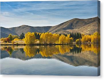 Willow Tree In Lake Tekapo Canvas Print