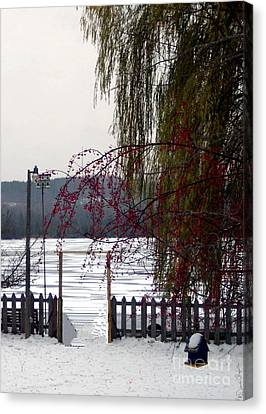 Willows And Berries In Winter Canvas Print by Desiree Paquette