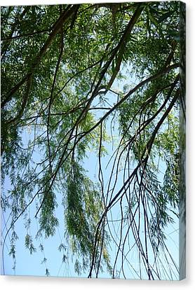 Wind In The Willow Canvas Print by Alys Caviness-Gober
