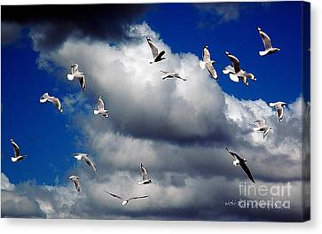 Canvas Print featuring the photograph Wind Sailing Seagulls by Vicki Ferrari