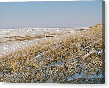 Wind Swept Canvas Print by Michael Peychich