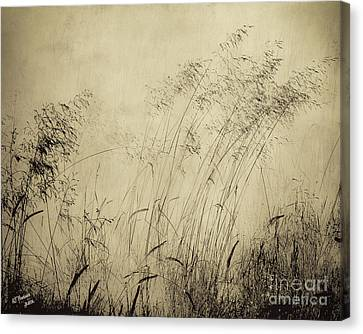 Windblown Canvas Print by Arne Hansen