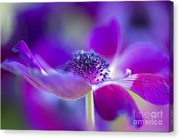 Close Focus Floral Canvas Print - Windflower by Jacky Parker