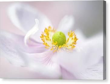 Close Focus Floral Canvas Print - Windflower Waves by Jacky Parker