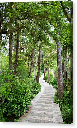 Winding Path Canvas Print by Ivan SABO