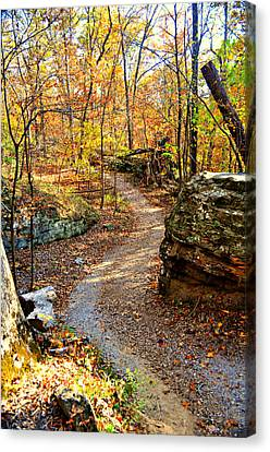Winding Trail Canvas Print by Marty Koch