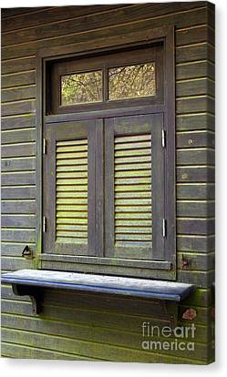 Cabin Wall Canvas Print - Window And Moss by Carlos Caetano