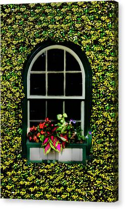 Window On An Ivy Covered Wall Canvas Print by Bill Cannon