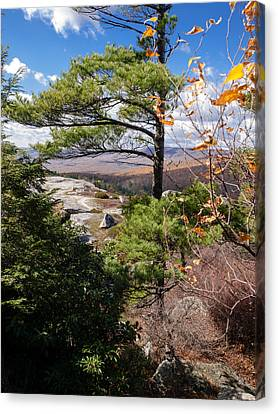 Windswept Pine Canvas Print by Jim DeLillo