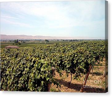 Wine Country Canvas Print by Charles Robinson