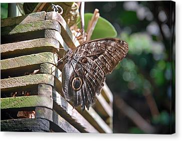 Winged Wood Canvas Print
