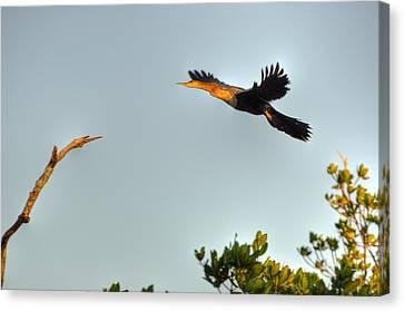 Wings Canvas Print by Barry R Jones Jr