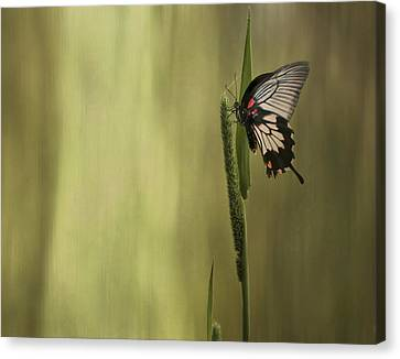 Wings Of The Heart Canvas Print
