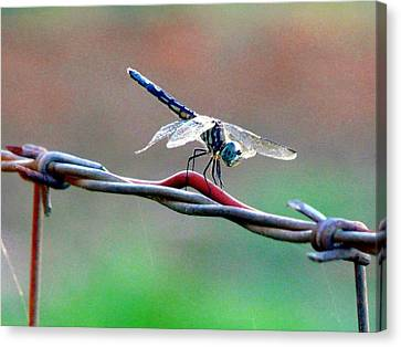 Wings Of Wire Canvas Print