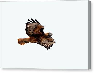Wings Wide Open Canvas Print