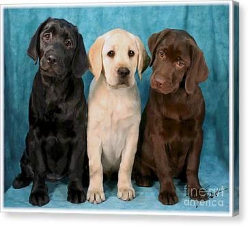 Winkin Blinkin And Nod  Lab Puppies Canvas Print by Maxine Bochnia