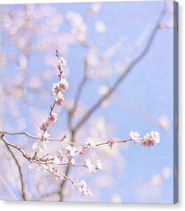 Winter Blossom Canvas Print by Jill Ferry